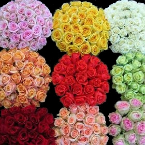 Mother 39 s day flowers last chance specials for What colors make rose