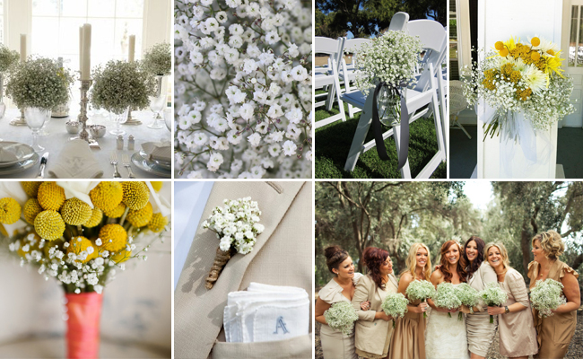 Baby's Breath Ideas