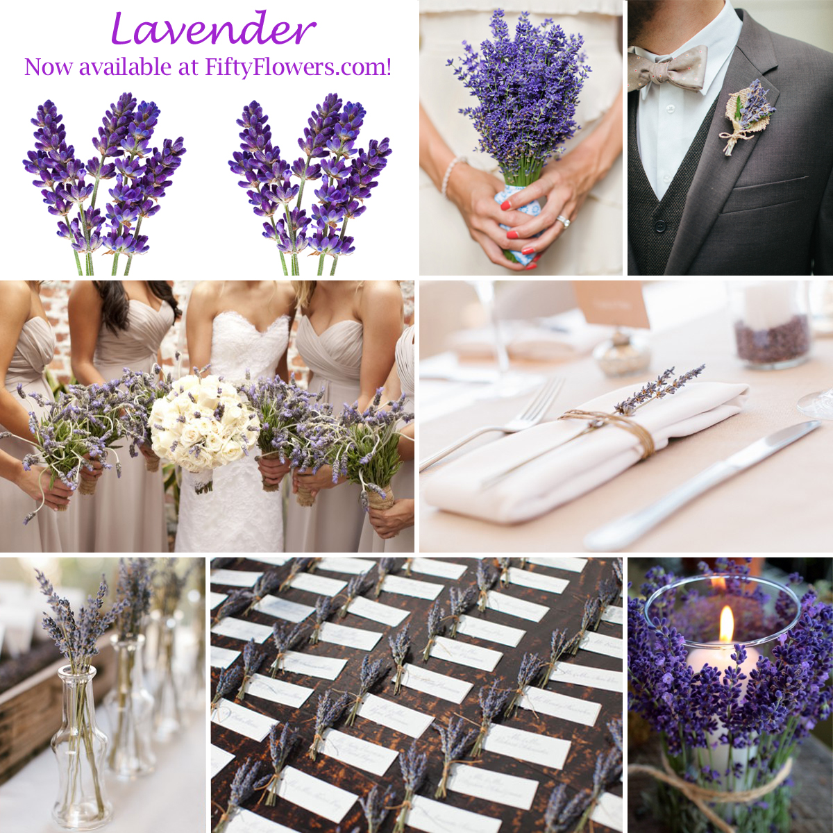 New at fiftyflowers fresh lavender the