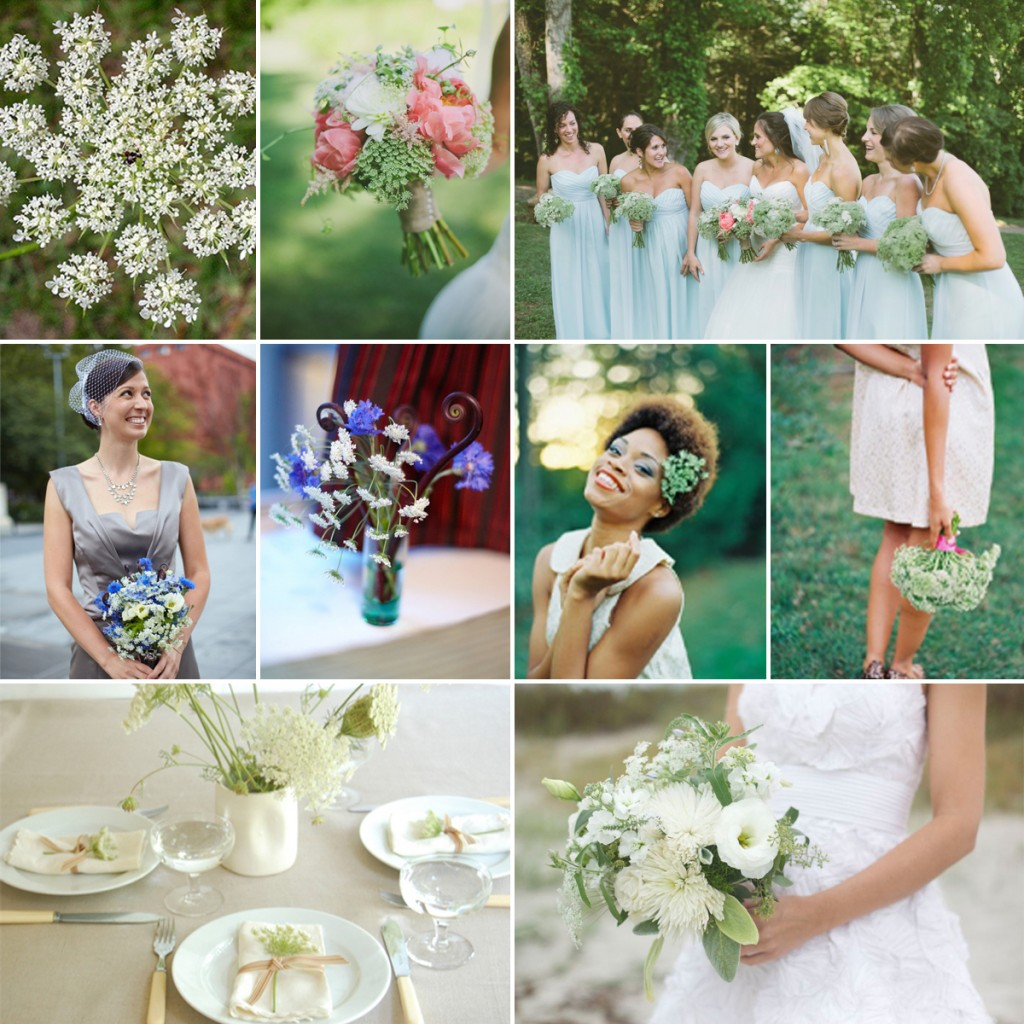 Queen Anne's Lace Wedding Ideas