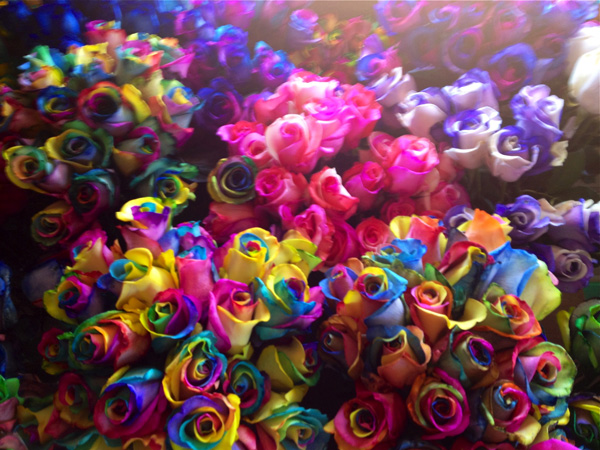Rainbow roses galore fiftyflowers the blog for How to make tie dye roses